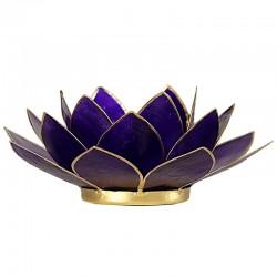 Lotus Purple Lighting